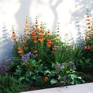 Colourful feature planting to garden beds.