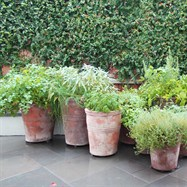 Fresh herbs planted in terracotta pots for adding to your culinary delights.